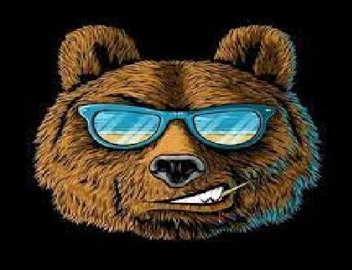 Моя битва за сертификат Яндекс.Директ